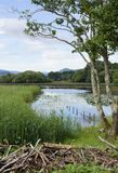 Killarney lakeside scene Stock Photo