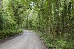 Killarney National Park; County Kerry Royalty Free Stock Photo