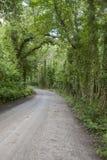 Killarney National Park; County Kerry Royalty Free Stock Image