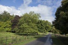 Killarney National Park, County Kerry Stock Photo