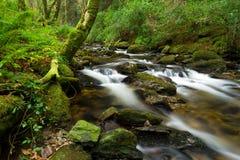 Killarney National Park creek. Co Kerry, Ireland Royalty Free Stock Photography
