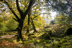 Killarney national park Royalty Free Stock Image