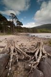killarney nationalpark 002 Royaltyfri Foto