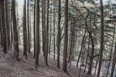 Killeagh森林2 图库摄影