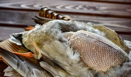 Killed duck before cooking. Killed duck lies on a wooden background. Hunting season. Top view. Cooking time royalty free stock photo