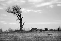 The killed nature (colourless). The killed nature (the burned down tree and a heap of automobile tire covers), colourless royalty free stock photo