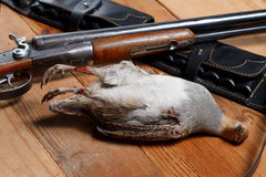 Killed partridge. Rifle and bandolier on wooden boards Stock Photos