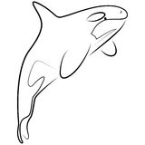 Killer Whale. Stylized illustration of isolated killer whale in black and white Stock Photo