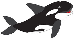 Killer whale. The  clip-art of the swimming killer whale Royalty Free Stock Photography
