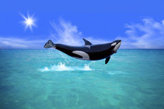 Killer Whale. Jumping out of the water Stock Photo