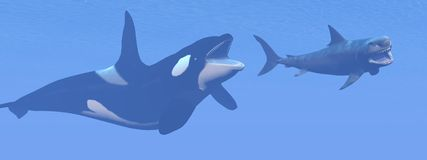Killer whale attacking small megalodon shark - 3D Royalty Free Stock Photos