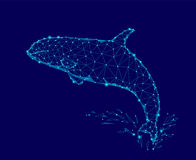 Killer whale 3d polygonal triangle model. Underwater sea wild danger monster. Glowing blue connected dots wire mesh logo. Water splash vector illustration art royalty free illustration
