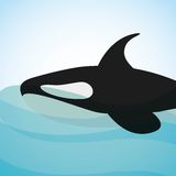 Killer whale design. Illustration eps10 graphic Royalty Free Stock Photos