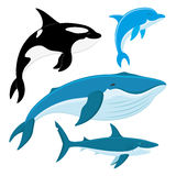Killer whale, dolphin, whale, shark. Killer whale, dolphin, whale, shark on a white background Royalty Free Stock Photo