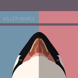 Killer Whale flat postcard. Vector image of the Killer Whale flat postcard Royalty Free Stock Image