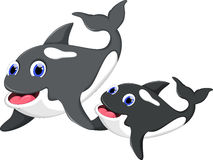 Killer whale and her son. Illustration of Killer whale and her son Stock Photography