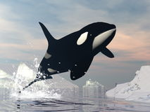 Killer whale jump - 3D render. Killer whale jumping upon ocean among icebergs by sunset royalty free illustration
