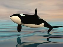 Killer whale jump - 3D render. Killer whale jumping upon ocean water by sunset Stock Photo