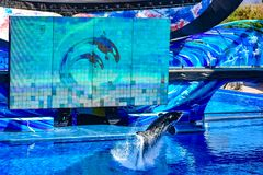Killer whale jumping on blue water in One Ocean show at Seaworld 8. Orlando, Florida, January 01, 2019 . Killer whale jumping on blue water in One Ocean show at stock photo
