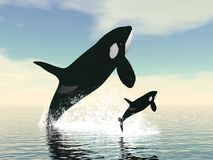 Killer whale mum and baby - 3D render Stock Image