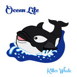 Killer whale in the ocean. Ocean life. Killer whale or orca swimming in the ocean. Vector illustration. EPS 8 Stock Images
