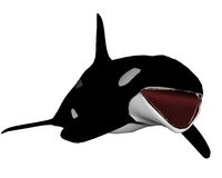 Killer whale opening mouth - 3D render Royalty Free Stock Images