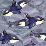 Killer whale, Orca, hand painted watercolor illustration, seamless pattern on blue, gray ocean surface with waves. Background Stock Images