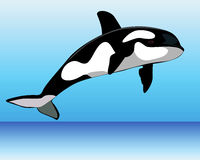 Killer Whale over the water. On a blue background Stock Photo