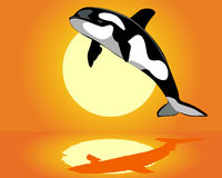 Killer Whale over the water. On an orange background Stock Images