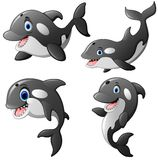 Killer whale set cartoon. Illustration of killer whale set cartoon Royalty Free Stock Photography