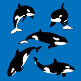 Killer whale set vector. Killer whale set of vector silhouettes with white spots on blue background vector illustration
