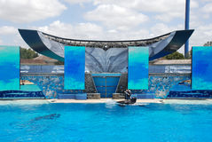 Killer whale shamu show in seaworld san diego Royalty Free Stock Images