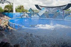 Killer Whale Splash Royalty Free Stock Photos