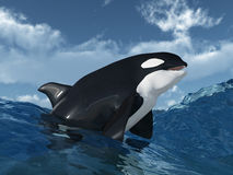 Killer whale in the stormy ocean Royalty Free Stock Image
