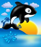Killer whale with sunset. Color illustration Royalty Free Stock Photo