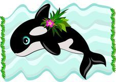 Killer Whale Swimming Royalty Free Stock Images