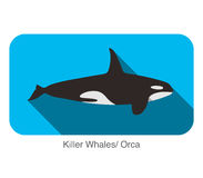 Killer Whale swimming in the sea flat icon design. Vector illustration Stock Photography