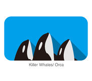 Killer Whale swimming in the sea flat icon design. 