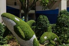 Killer Whale Topiary garden - Seaworld, Orlando Stock Image