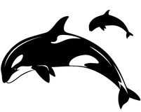 Killer whale vector. Killer whale illustration - black and white outline and silhouette Stock Photo