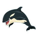 Killer whale. Vector image of an cartoon killer whale Stock Images