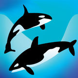 Killer whales Stock Photography