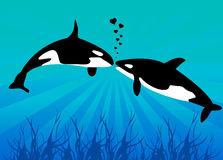 Killer Whales. Vector illustration of two killer whales Stock Image