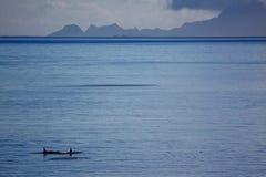 Killer whales Stock Photos