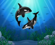 Killer whales cartoon with underwater. View and coral background Royalty Free Stock Photo