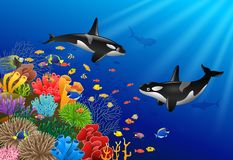 Killer whales cartoon with underwater. View and coral background Stock Images