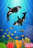 Killer whales cartoon with underwater view. And coral background. Illustration Royalty Free Stock Photos