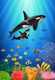 Killer whales cartoon with underwater view. And coral background Stock Photo