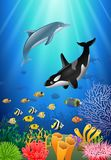 Killer whales and dolphin cartoon with underwater view. And coral background Stock Photo