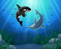 Killer whales and dolphin cartoon. With underwater view and coral background Royalty Free Stock Photo